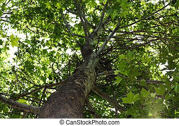 albero, fondo, natura