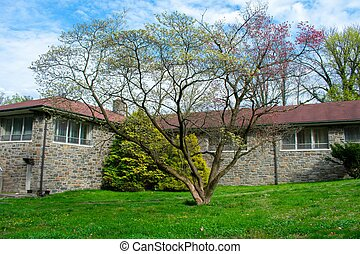 albero, fronte, tetto, costruzione rossa, azzurramento, ciottolo