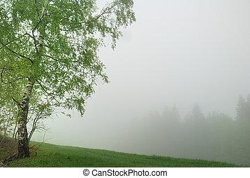 albero frusta, e, distante, foresta, in, spesso, nebbia