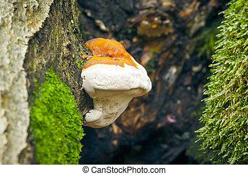 albero, fungo