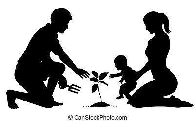 albero genealogico, piantatura
