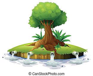 albero grande, isola