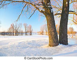 albero, in, il, inverno