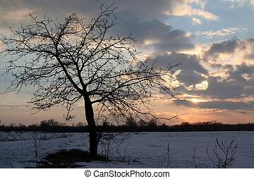 albero, in, il, tramonto