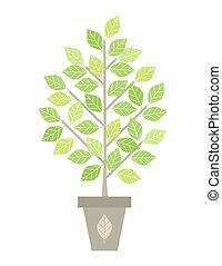 albero, in, vaso