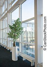 albero interno, appresso, il, grande vetro, windows, donetsk, aeroporto, su, marzo, 2, 2013