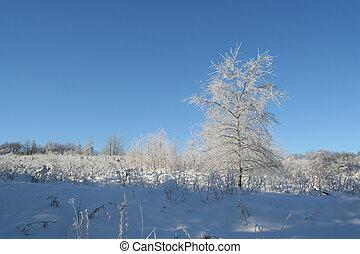 albero inverno