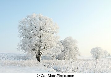 albero inverno, contro, uno, cielo blu