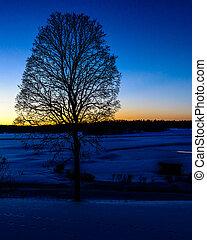 albero inverno, in, tramonto
