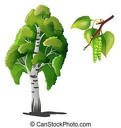 albero, isolato, betulla