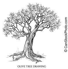 albero, isolato, mano, vettore, oliva, disegnato