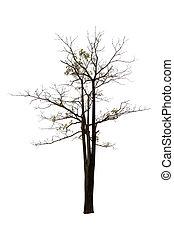albero, isolato, ramo