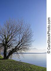 albero, lago