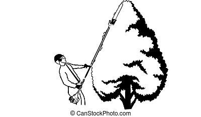 albero, landscaper, trimmer