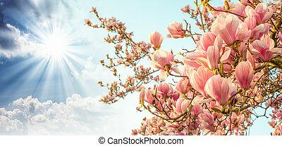 albero magnolia, fiore, con, colorito, cielo, sullo sfondo