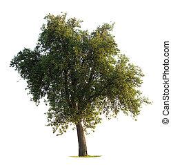 albero, mela