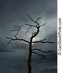 albero, morto