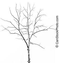 albero, morto, fondo