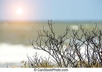 albero morto, rami, su, il, spiaggia.