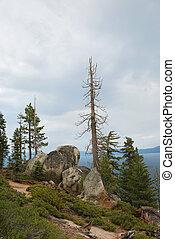 albero morto, sopra, tahoe, lago