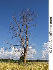 albero morto, su, cielo blu, fondo
