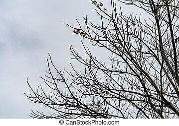albero morto, su, cielo, fondo