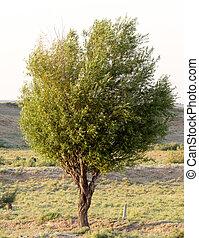 albero, natura