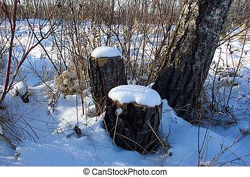 albero, neve, ceppi