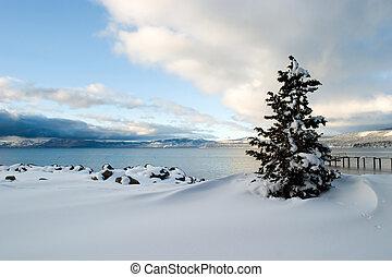 albero, neve, lago tahoe