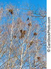 albero, nidi, rami, uccello