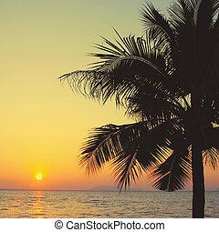 albero noce cocco, effetto, filtro, palma, retro, alba