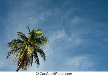albero noce cocco, su, cielo blu, fondo.