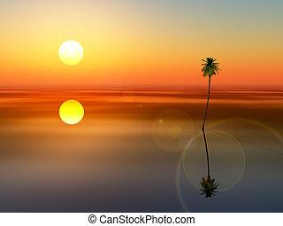 albero noce cocco, tramonto, mare