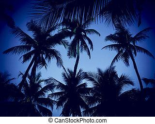 albero, noce di cocco, spiaggia, silhouette