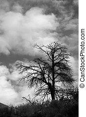 albero, nubi