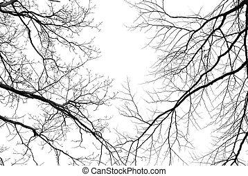 albero nudo, rami, su, uno, pallido, sfondo bianco