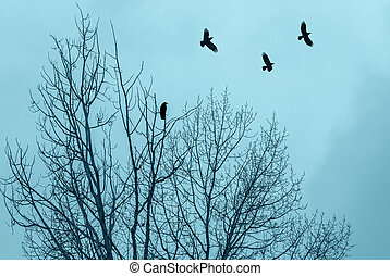 albero, nudo, silhouette, rami, corvi