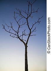 albero nudo, su, cielo, fondo