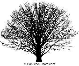 albero nudo, vettore, fondo