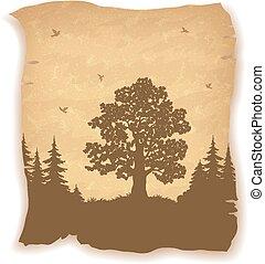 albero, paesaggio, quercia, uccelli, abeti