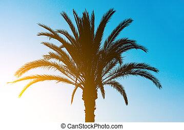 albero, palma, silhouette, sunset.