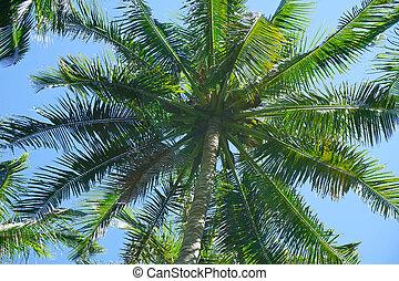 albero palme cocco, su, cielo blu, fondo