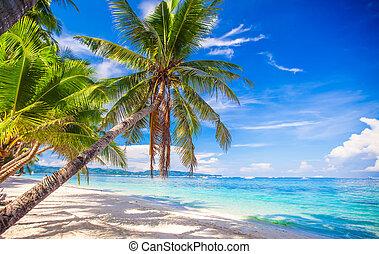 albero palme cocco, su, il, bianco, spiaggia sabbiosa
