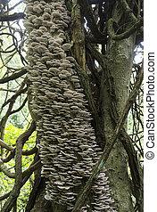 albero, pieno, di, funghi, e, funghi