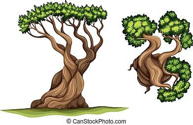 albero, pino, bristlecone