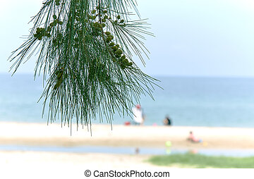 albero, pino, sfocato, fuoco, fondo, spiaggia
