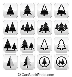 albero pino, vettore, bottoni, set