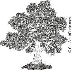 albero quercia, e, erba, nero, contorni