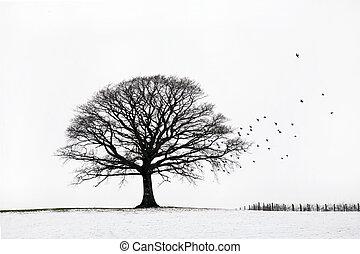 albero quercia, in, inverno