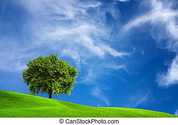 albero quercia, in, natura